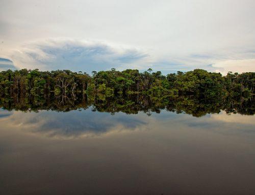 À la découverte de l'Amazonie brésilienne